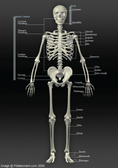 The skeletal system why and how we must take care of it