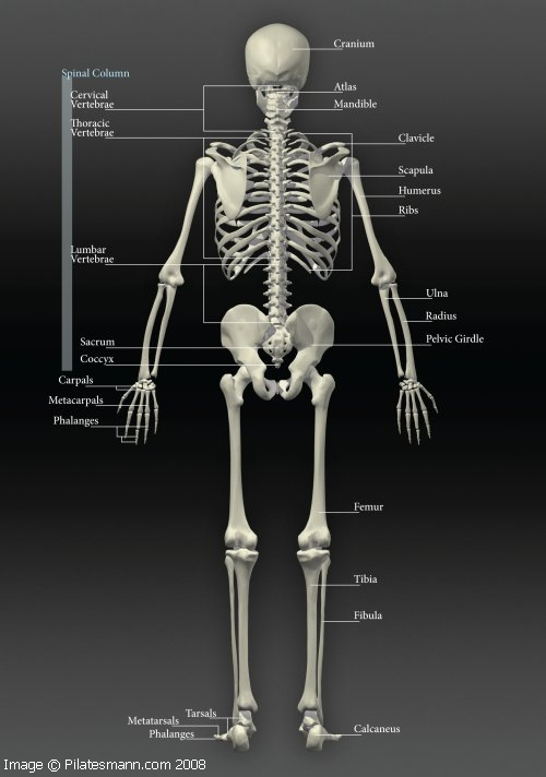 Aging changes in the bones - muscles - joints